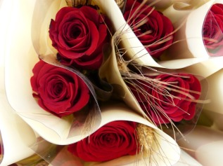 rosa-906439_1280